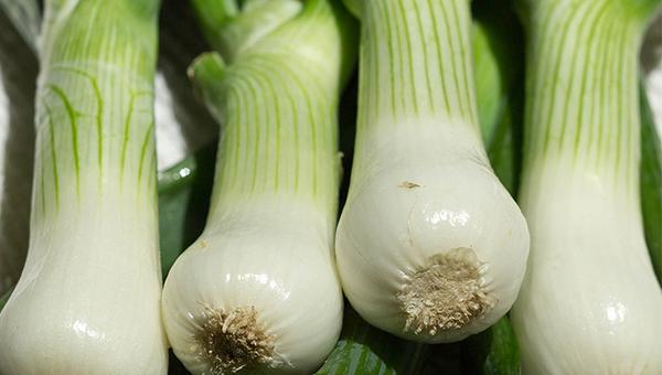 Cebollita de verdeo final