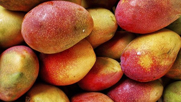 Mango final